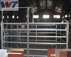 Comitati commerciali del Corral del tubo del quadrato di assicurazione/recinzione galvanizzata del cavallo