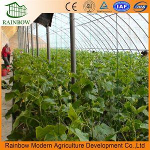 Hotsall характерны только для северных районов Китая зимой теплый овощной пролить
