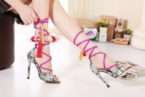 Nouveau design Fashion haut talon Chaussures femmes
