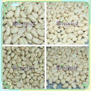 新しい25/29、29/33の穀物によって白くされるピーナツカーネル