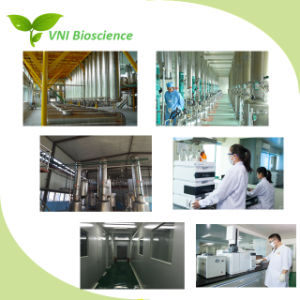 ISO Extrait certifié SGS Haricot/Phaseolus vulgaris Extract