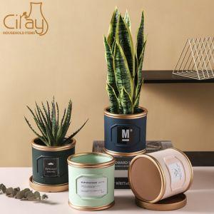 Vérin de luxe de lumière pour l'intérieur Flowerpot plante verte avec bac d'or