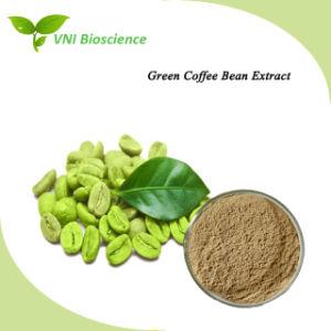L'acide chlorogénique certifié ISO SGS/extrait de grains de café vert