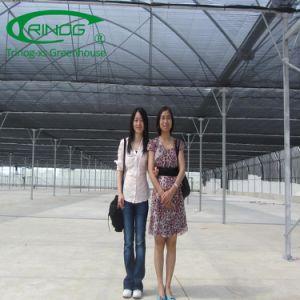Hoge tunnel commerciële serre voor verkoop