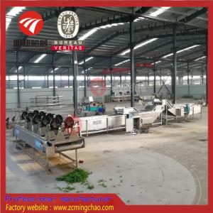 Meilleure vente du matériel de nettoyage de Fruits Légumes Ligne de production de lavage