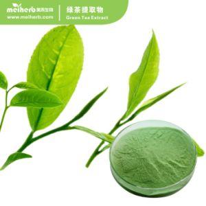 Estratto EGCG 50% del tè verde di alta qualità