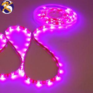 LED SMD 335 60/M DE TIRA DE LEDS de color rosa