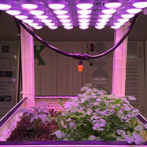 Het Ontwerp van het octrooi met leiden van het Kinderdagverblijf van de Serre van de Tuin van de Kop van de Reflector kweekt Lamp