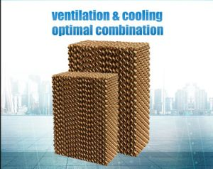 Avícola a água do sistema de resfriamento evaporativo e almofada de resfriamento evaporativo