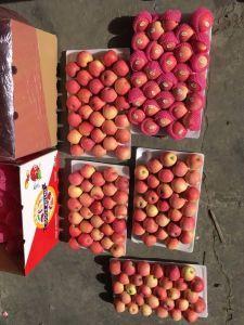 La nouvelle récolte fraîche FUJI Apple avec l'emballage carton