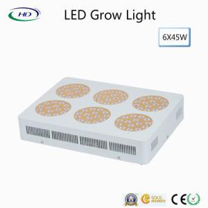 Heiß-Verkaufend wachsen 270W Apollo LED für grünes Haus-Pflanzen hell