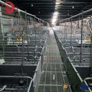 Suína Suíno Fazenda modernos equipamentos do Projeto Turn-Key Automática