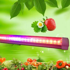 2FT T8 9W LED coltivano l'indicatore luminoso del tubo per la serra