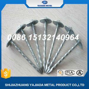 Electroc Gegalvaniseerde Spijkers, de Spijkers van het Dakwerk van de Paraplu