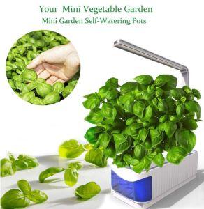 O LED do Sistema de Cultivo hidrop ico colorida mini jardim inteligente planta crescer luz LED de Desktop