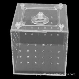 Kundenspezifischer freier zusammengebauter führender Acrylkasten kleine Reptilien Gleisketten-Haus