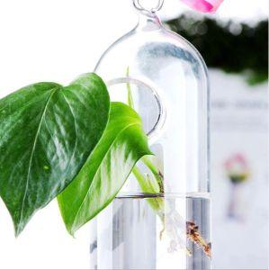 Циркуляр Hydroculture ваза с борным покрытием полупроводниковых материалов