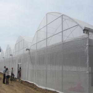 De film Hydroponic Groen Huis van Portugal voor Groente