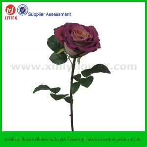 상한 Quality Artificial 로즈 또는 Imitation 로즈 (SFL1090-C8044)