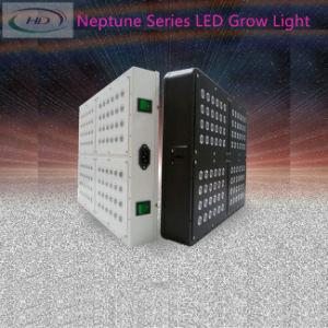 Neptun 4 LED wachsen für grünes Haus hell