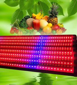 La coltura integrata T8 LED del tessuto del tubo sviluppa l'indicatore luminoso