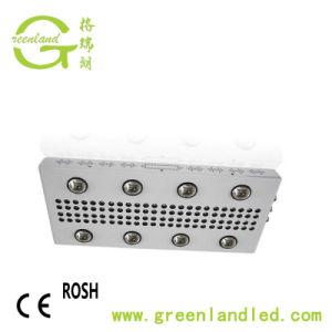 Spettro completo 600W 900W 1200W idroponico con l'indicatore luminoso della pianta dell'azienda agricola della PANNOCCHIA LED del chip del CREE