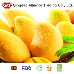 GREEN MANGO TRADING - Singapore Business Directory