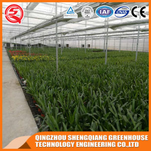 Légumes / Jardin / Fleurs / Farm Multi Span Feuille PC Green House