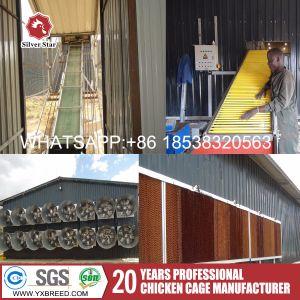 Q235 la malla de alambre de la capa de la granja de jaulas en batería