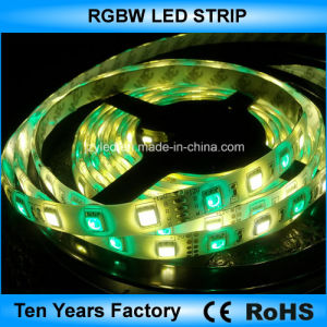 striscia flessibile di 12V SMD 60LEDs 5050 RGBW LED