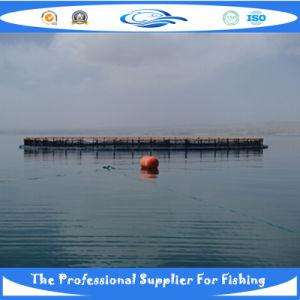 China Draht-Fisch-Käfig, Draht-Fisch-Käfig China Produkte Liste de ...