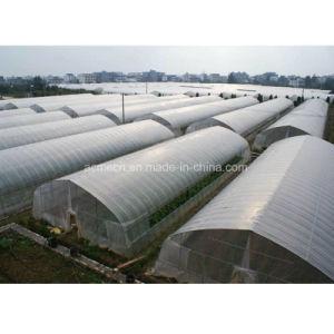 Galvanisiertes Rohr-Plastikfilm-Gewächshaus für das Gemüsepflanzen