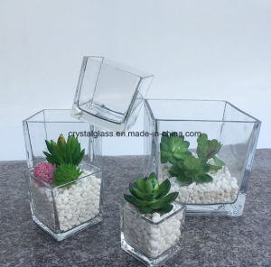 Vase en verre clair pour les plantes succulentes carré