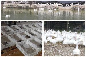 2017更新済SolarおよびElectric Industrial 500 Eggs Chicken Incubator