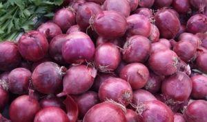 Nouvelles fraîches pelées Violet rouge jaune blanc oignon ronde