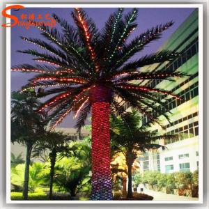 Mais barato Data Artificial Palmeira para decoração de hotel