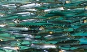 Изысканный рыб и масло с 190кг Упаковка барабана