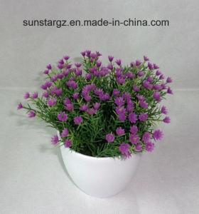 PE Gypso искусственных растительных W/белый котел для дома (50137)