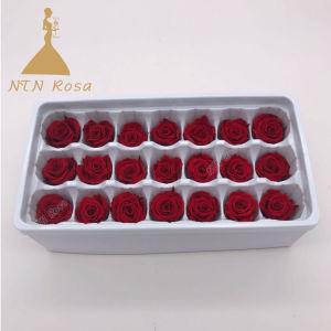مصنع إمداد تموين جيّدة يبيع أحمر يحفظ ورود في سعر جيّدة رخيصة