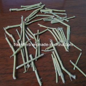 L'Ephedra Herb poudre naturelle