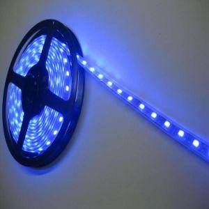 DC12V/24V super brilhante à prova de tubo de Silicone Transparente 5050 Tira de LED