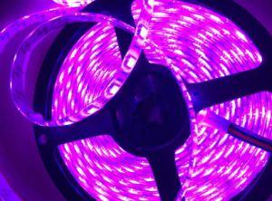 Waterproof Christmas 5050SMD Digital LED Strip LED Lighting