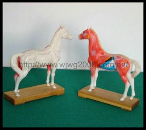 Высокое качество акупунктуры Model-Horse животных (M-6H)