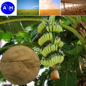 Amino ácido orgánico del 40% Polvo