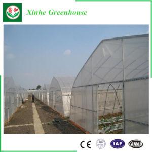 Multi Span la agricultura vegetal de la Casa Verde de la película de plástico