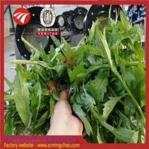 Haute qualité des fruits légumes non destructifs / Ligne de traitement de nettoyage
