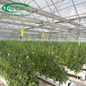 Landbouw geprefabriceerde serre voor hydrocultuursysteem