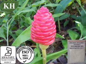 Zingiber Zerumbone Smith Extraia, CAS#: 471-05-6, Zerumbone 99%