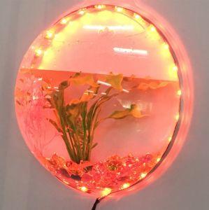 Kreatives, attraktives, erstaunliches an der Wand befestigtes Fisch-Becken!