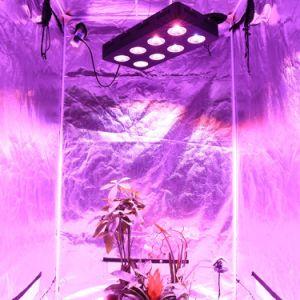 COB LED haute puissance à spectre complet grandir la lumière